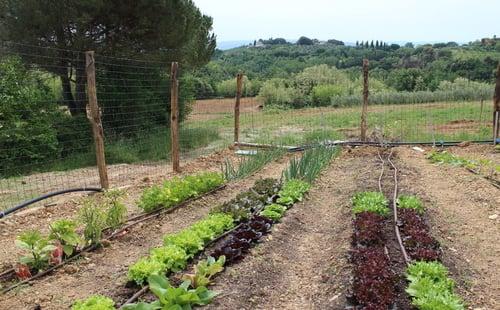 Organic garden Siena